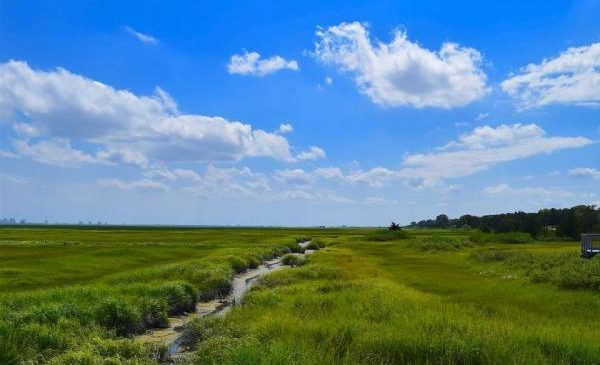 Coastal wetlands must migrate inland to survive climate change