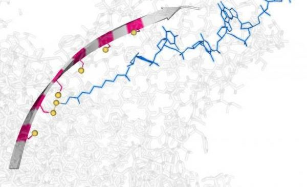 'Molecular hopper' can transport, manipulate single strands of DNA