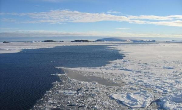 Small ice-free oasis helped Arctic marine life survive last ice age