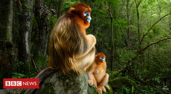 Wildlife Photographer of the Year: Gazing monkeys image wins