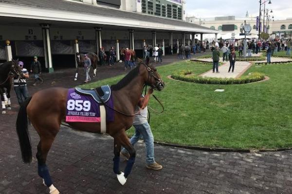 Breeders' Cup Preview: 'Future Stars' card set for Friday