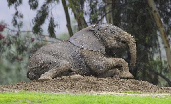 Cracks in skin help elephants keep cool