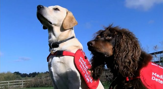 Malaria: Sniffer dogs to help in fight to eradicate disease