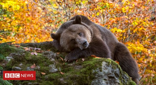 EU moves to protect large carnivores