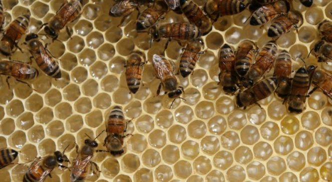 Exposure to pesticides makes bees less social, reduces colony size
