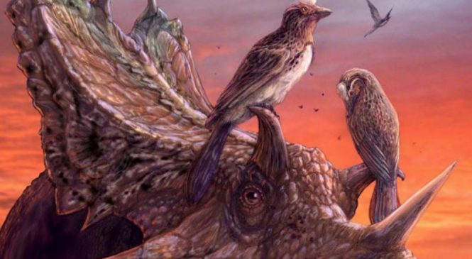 Near-complete fossil reveals evolution of advanced flight among early birds