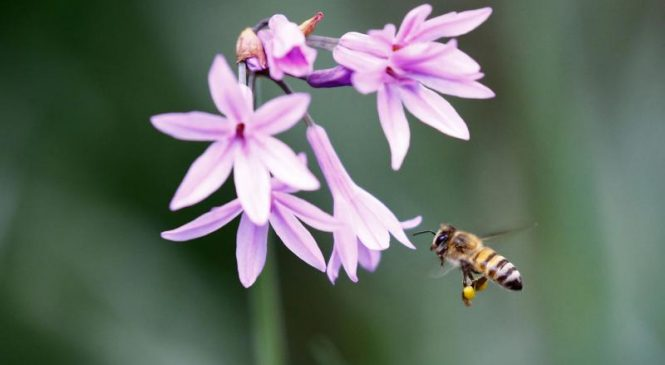 South African beekeepers blame insecticide for 1M-plus bee deaths