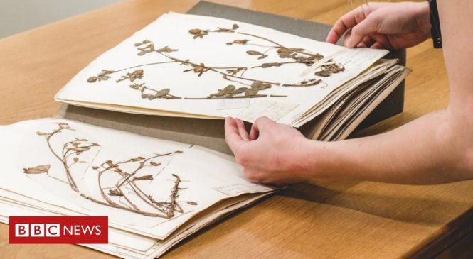 Nation's botanical treasure troves 'under huge threat'