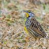 Study considers how climate change, shifting winds will impact migratory birds