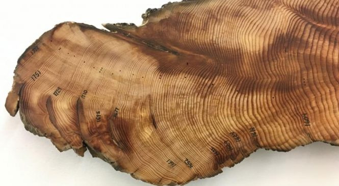 Tree rings help researchers understand drought intolerance