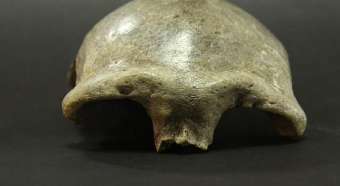 Ancient skull provides earliest evidence of modern humans in Mongolia