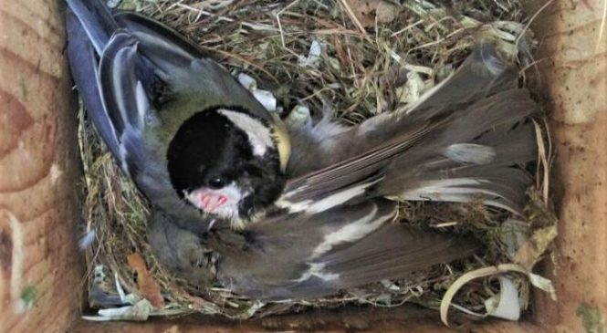 Climate change intensifies deadly bird rivalry
