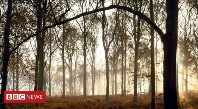 Paying tribute to the nation's forests