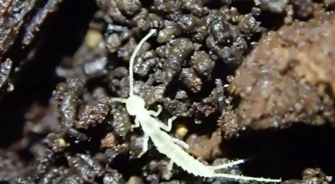 New primitive arthropod species found in cave long buried beneath ice