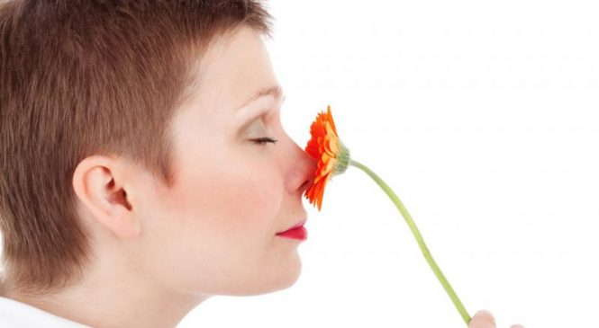 Nose receptors adapt to surrounding smells, researchers find