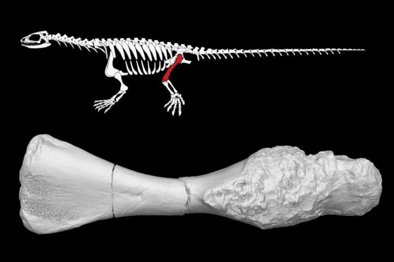 Paleontologists diagnose 240-million-year-old proto-turtle with bone cancer