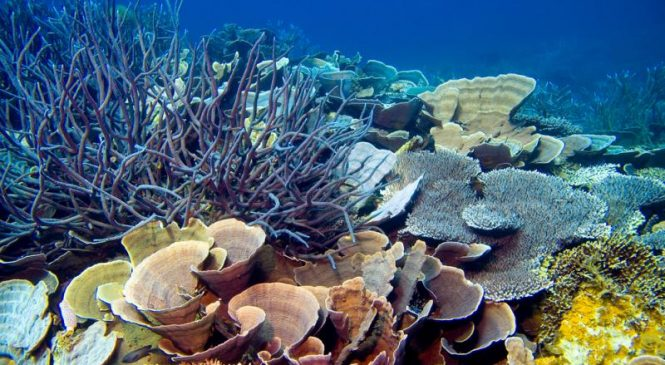 Solitary corals more likely survive in a warmer ocean