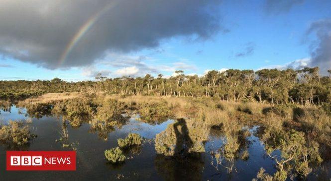 Wetland mud is 'secret weapon' against climate change