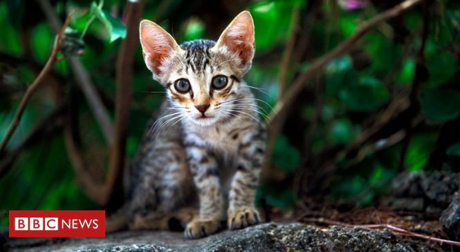Should cats be culled to stop extinctions?