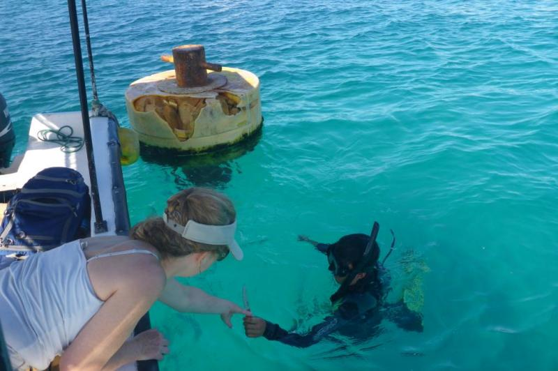Galapagos home to 53 invasive species, 10 times previous estimates