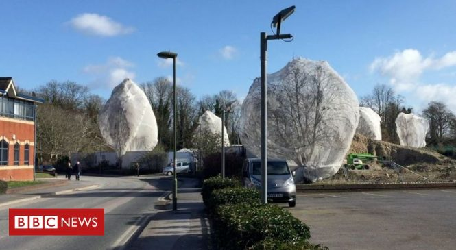 Netting to stop birds nesting: Call for new safeguards