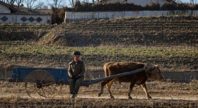North Korea cuts food rations to just 300g per person, per day