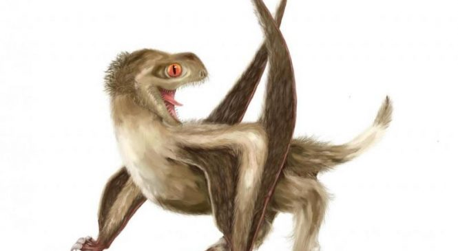 Feathers preceded birds by 100 million years