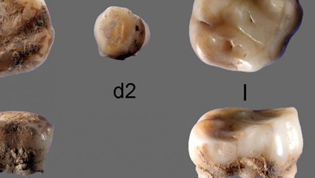 Milk teeth reveal previously uknown Ice Age people from Siberia