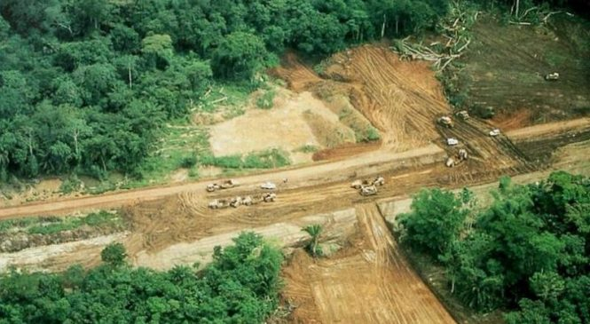 Road construction accelerates deforestation in the Congo, study shows