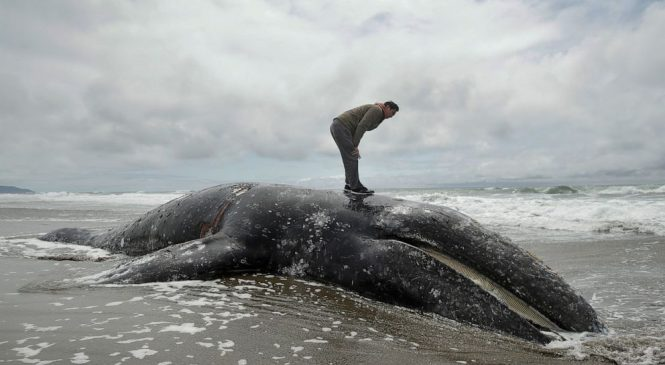 State waterfront owners asked to take dead whales
