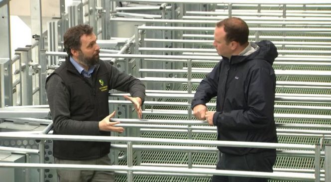 New sheep shed examines farming's impact on climate
