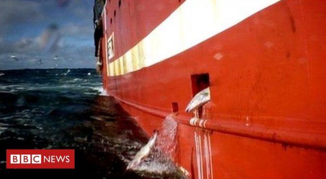 Fishermen 'still illegally discarding dead fish' says report