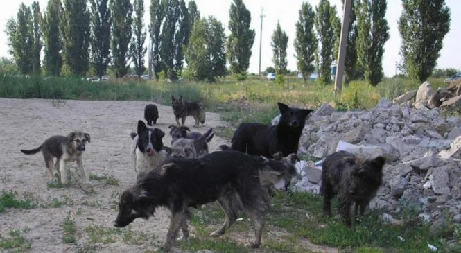 Dogs stuck in the middle of the canine social ladder show more aggression