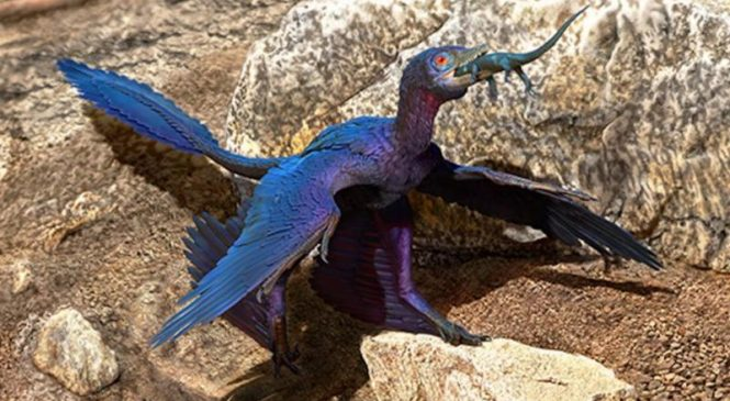 New lizard species found in guts of microraptor