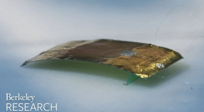 Roach-inspired robot nearly as fast as real thing, unsquashable