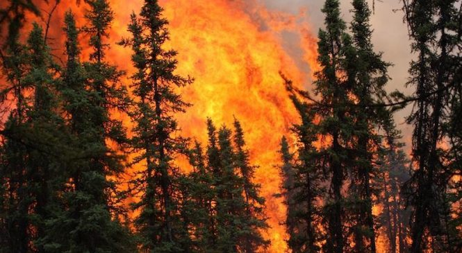 Heat, wildfires could alter Alaska's forest composition