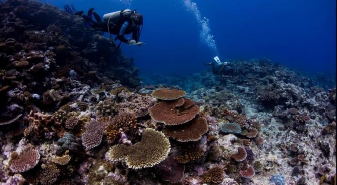 Largest-of-its-kind coral study offers plan to save the planet's reefs