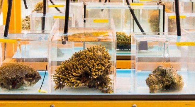 Great Barrier Reef outlook very poor, Australia says