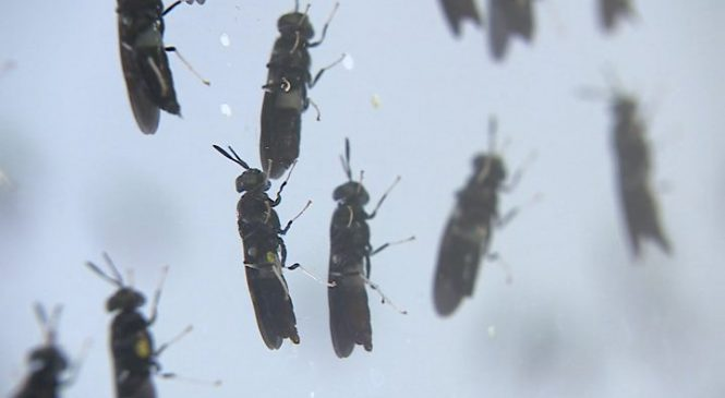 Insect-based food 'better for pets than top steak'