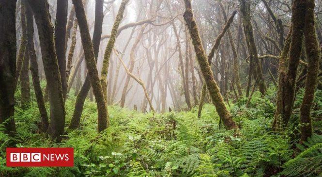 'Alarming' extinction threat to Europe's trees