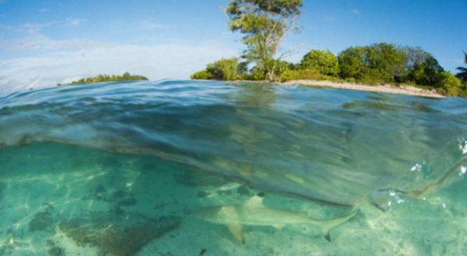 Even hefty shark pups struggle on degraded reefs