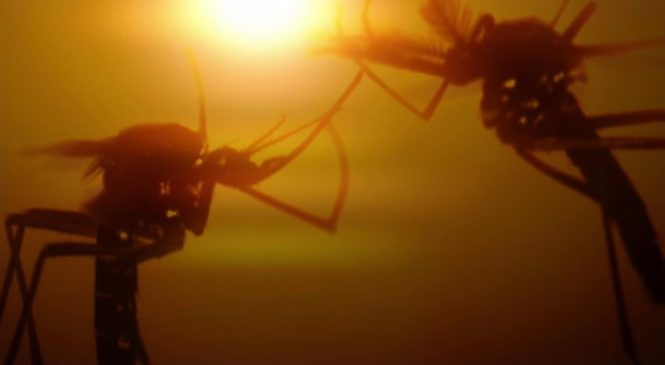 Defeat malaria in a generation – here's how