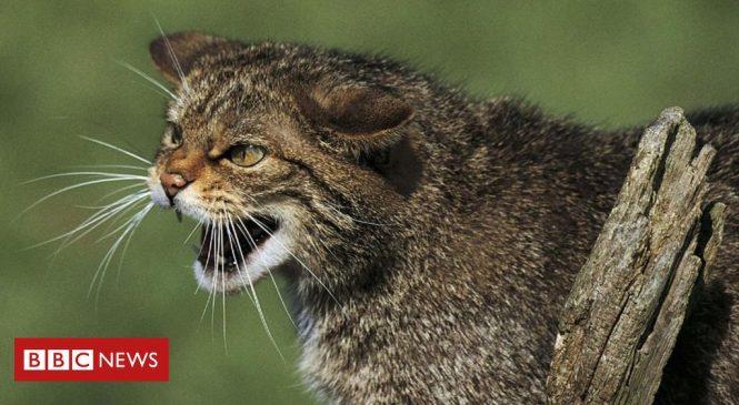 More than a quarter of UK mammals face extinction