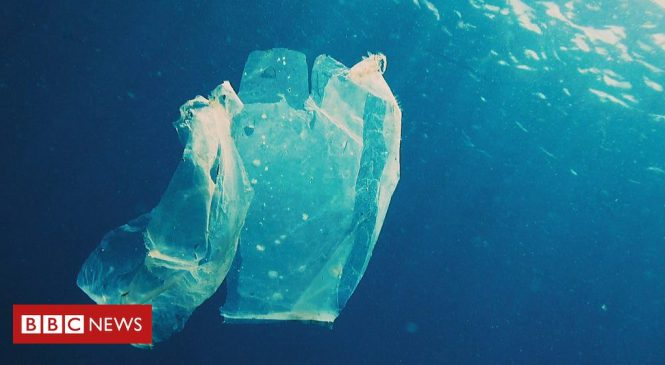 How plastic bags were supposed to help save the planet