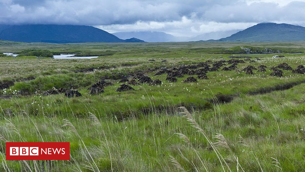 Climate change: Peatlands 'turning into carbon sources'