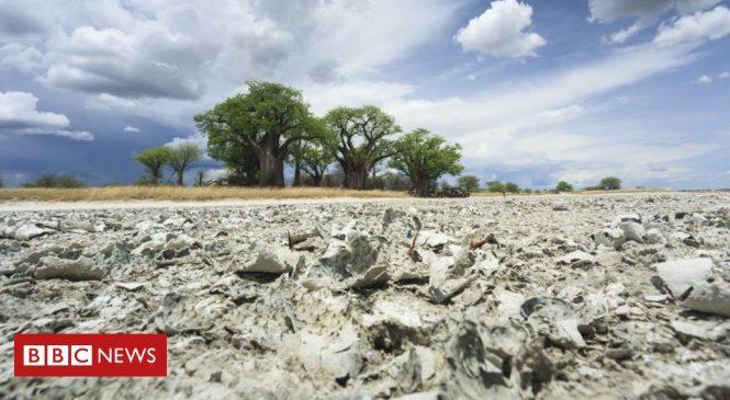 Origin of modern humans 'traced to Botswana'