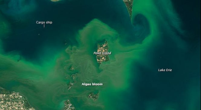 Lakes are experiencing worse algal blooms, global survey shows