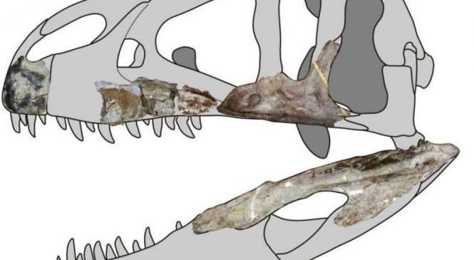New giant predatory dinosaur species found in Thailand