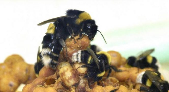 Worker bees forgo sleep to care for young