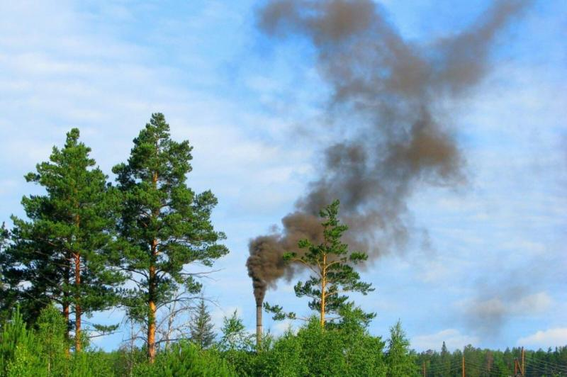 Trees often better, cheaper than technology at mitigating air pollution, study says